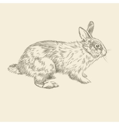 Vintage hand drawing rabbit vector