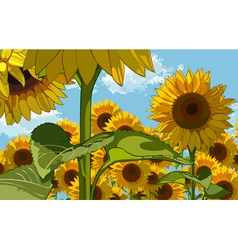 Field of flowers of sunflowers vector