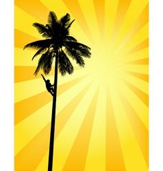 Sun palm vector