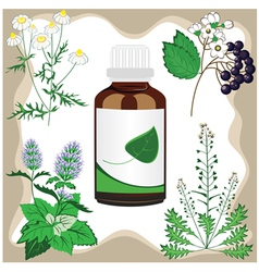 Medicinal herbs with bottle vector