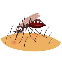 Mosquito cartoon sucking blood from human skin vector