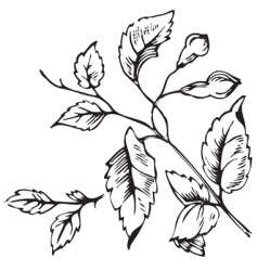 Antique foliage engraving vector