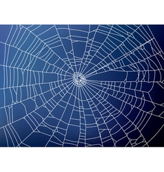 Spider web2 resize vector