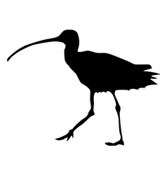Black silhouette of curlew vector