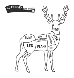 Deer meat cuts vector