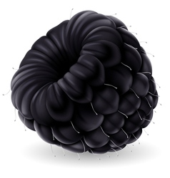 Blackberry on white background vector