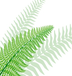 Fern leaf vector