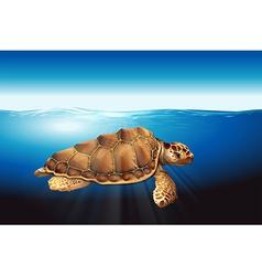 A sea turtle vector