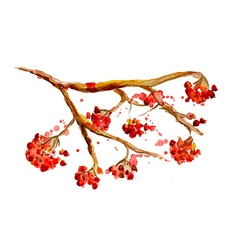 Watercolor painting - rowan berry branch vector