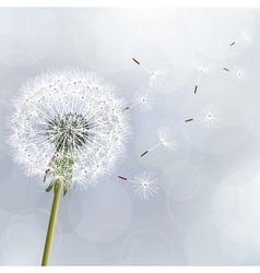 Floral trendy background with flower dandelion vector