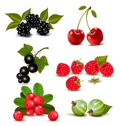 Big group of fresh berries and cherries vector