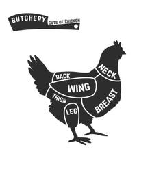 Cuts of chicken butcher diagram vector