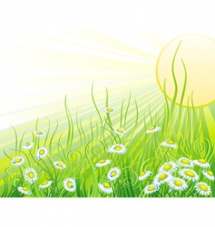 Sunny meadow with flowers vector