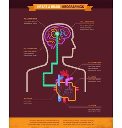 Brain and heart connected infographic vector