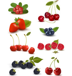 Big group of fresh berries and cherries vector