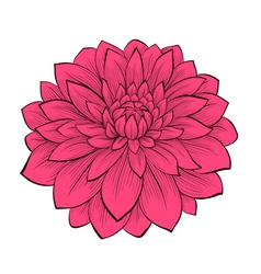 Flower dahlia drawn in graphical style contours vector
