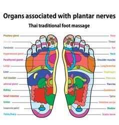 Foot massage vector