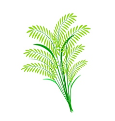 Cereal plants or ferns leaves on white background vector