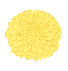 Beautiful yellow flower isolated on white backgrou vector