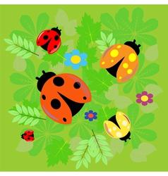 Ladybird vector