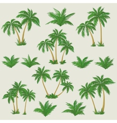 Tropical palm trees set vector
