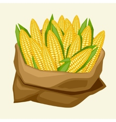 Stylized sack with fresh ripe corn cobs vector