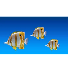 Butterfly fishes vector