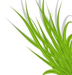 Summer green grass isolated on white background vector