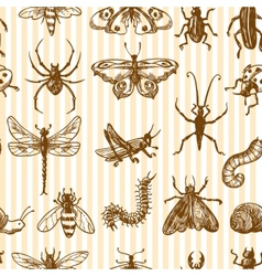 Insects sketch seamless pattern monochrome vector