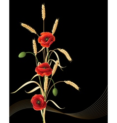 Wheat ears and poppy vector