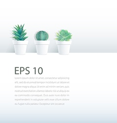 Cactus plant in pot on white background vector