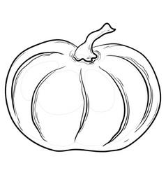 Pumpkin contours vector
