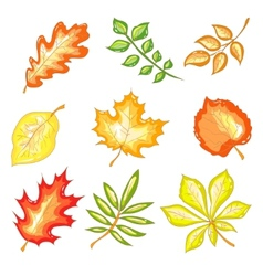 Autumn leaves set vector