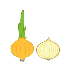 Onion and slice vector