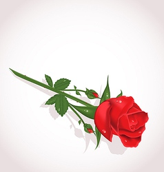 Elegant single rose for design your greeting card vector