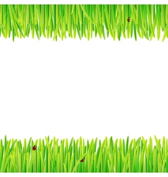 Background of spring grass vector