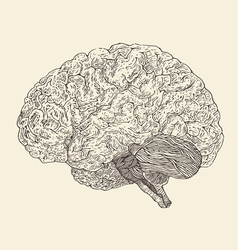 Human brain vintage  engraved retro vector