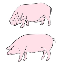Pig drawing vector