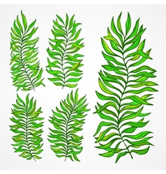 Set of exotic foliage vector