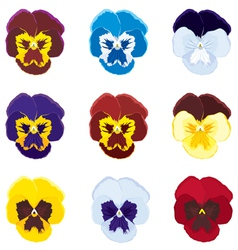 Viola tricolor vector