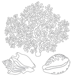 Coral and shells vector