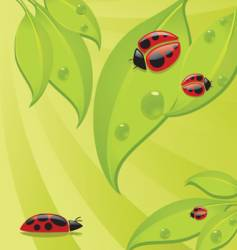 Lady bugs vector