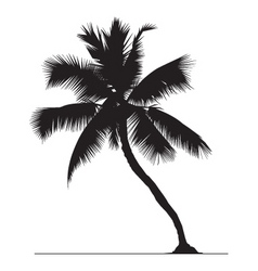 Coconut tree vector
