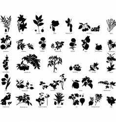 Berries and flowers silhouettes vector
