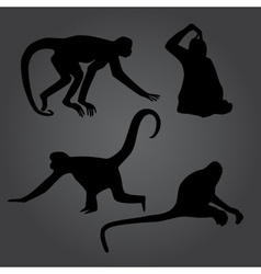 Monkey shadows silhouette set eps10 vector