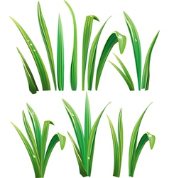 Green grass on white vector
