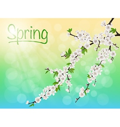 Spring blooming cherry branch with white flowers vector
