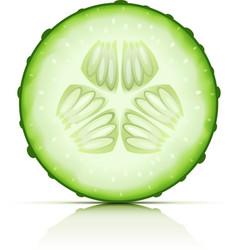 Ripe cucumber vector