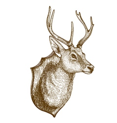 Engraving deer head vector