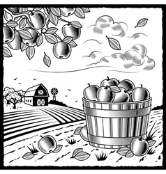 Landscape with apple harvest black and white vector